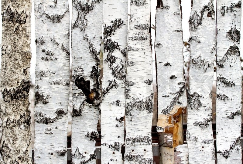 Birke Holz birke holz zaun textur stockfoto colourbox