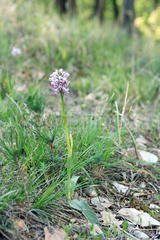 Die Ersten Blumen Im Wald Fruhling Stockfoto Colourbox