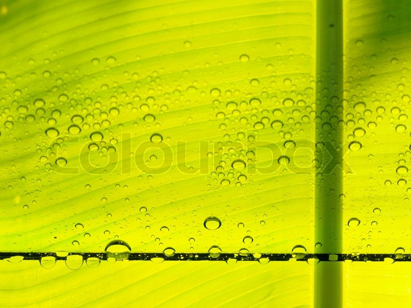 Bright green ecology background, stock photo