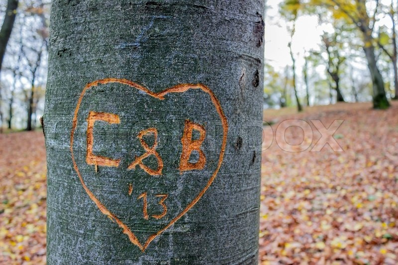 Love messages carved into tree heart in