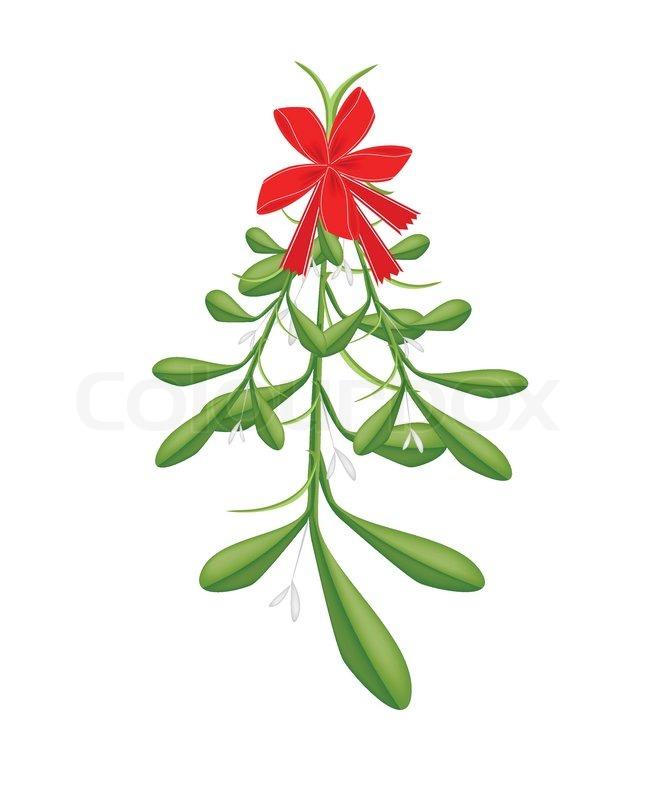 mistletoe bunch or viscum album with a christmas red ribbon for rh colourbox com mistletoe vector black and white mistletoe vector free download