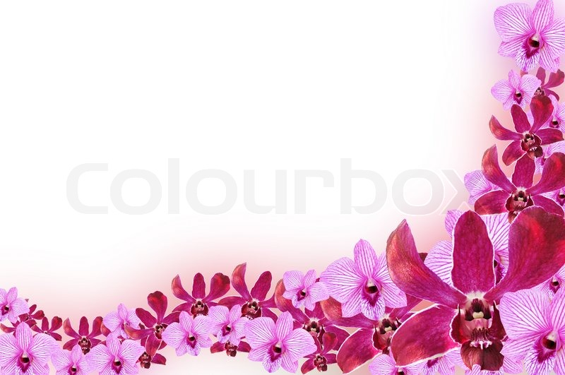 purple orchid flowers border design stock photo