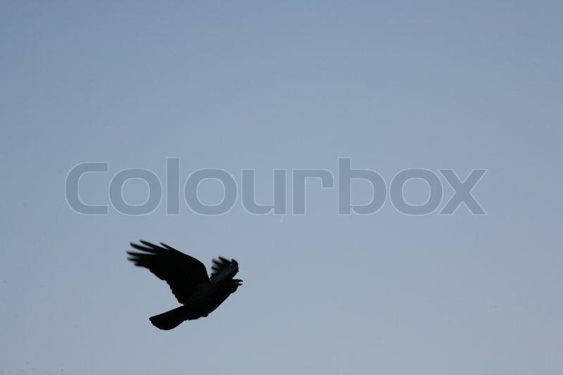 Bird in the sky, stock photo