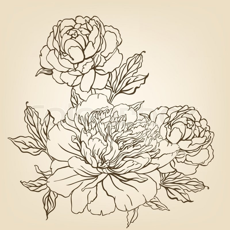 Flower Line Drawing Vintage : Vintage hand drawing background with flowers vector