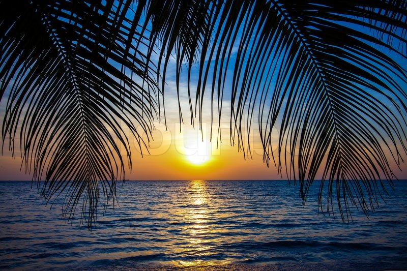 beach sunset with palm trees. beautiful tropical sunset with palm trees beach palms on the ocean stock photo colourbox 6