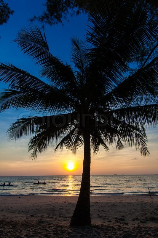 Beautiful Tropical Sunset With Palm Trees. Tropical Beach
