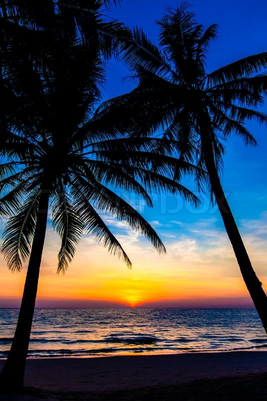 Beautiful Tropical Sunset With Palm ...