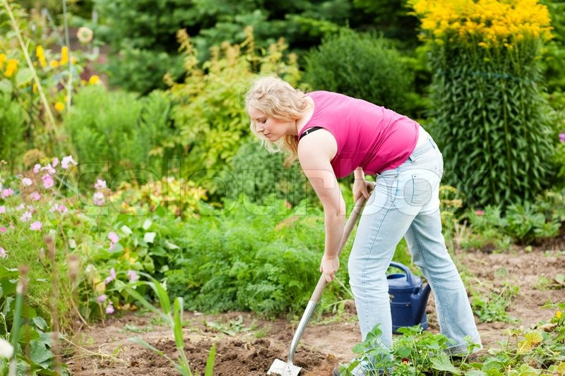 woman gardener digging the soil in spring with a spade to make the