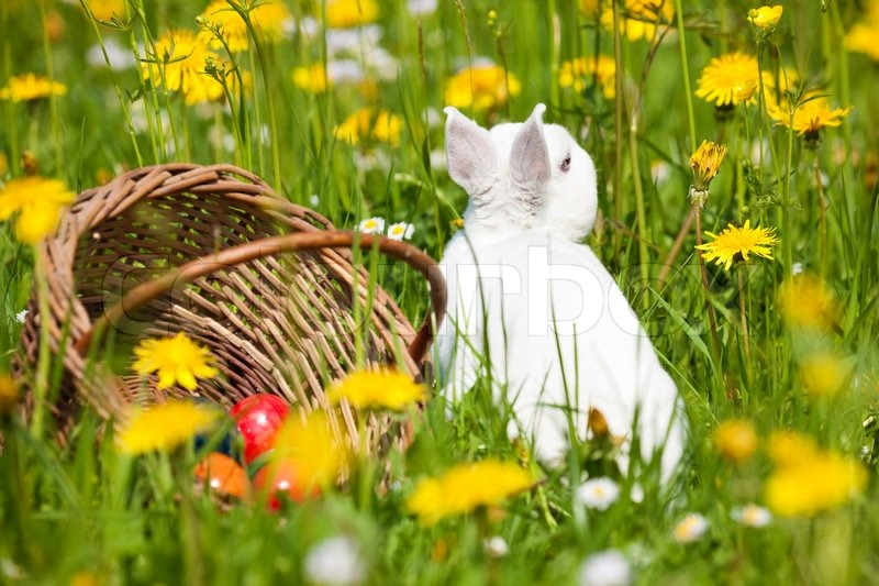 Easter bunny with eggs on a meadow in spring | Stock Photo | Colourbox