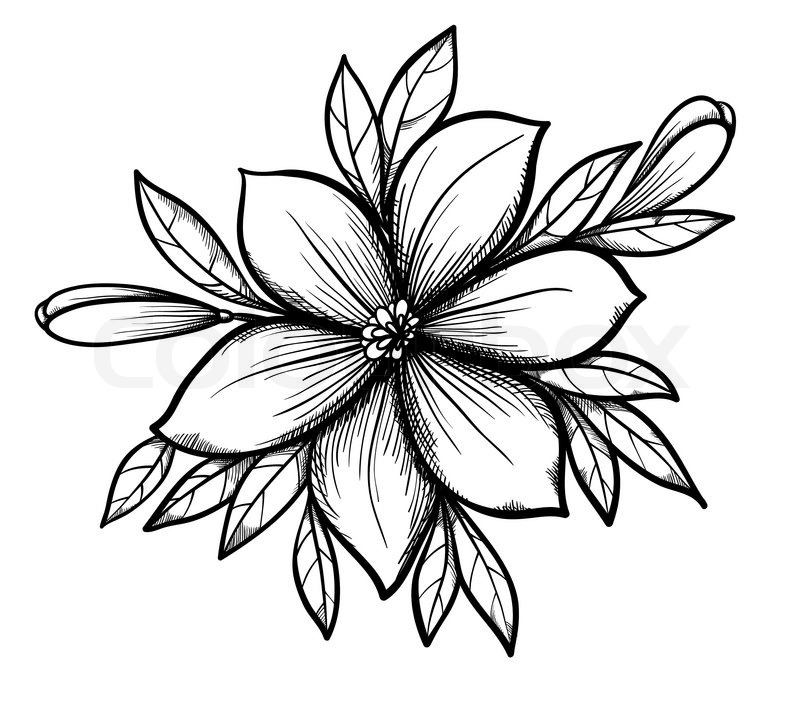 Beautiful graphic drawing Lily branch with leaves and buds ...