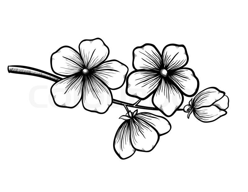 Line Drawing Spring Flowers : Branch of a blossoming tree in graphic black white style