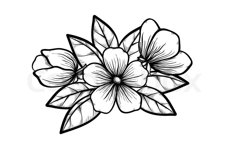 Branch of a blossoming tree in graphic black white style drawing by branch of a blossoming tree in graphic black white style drawing by hand symbol of spring stock vector colourbox mightylinksfo