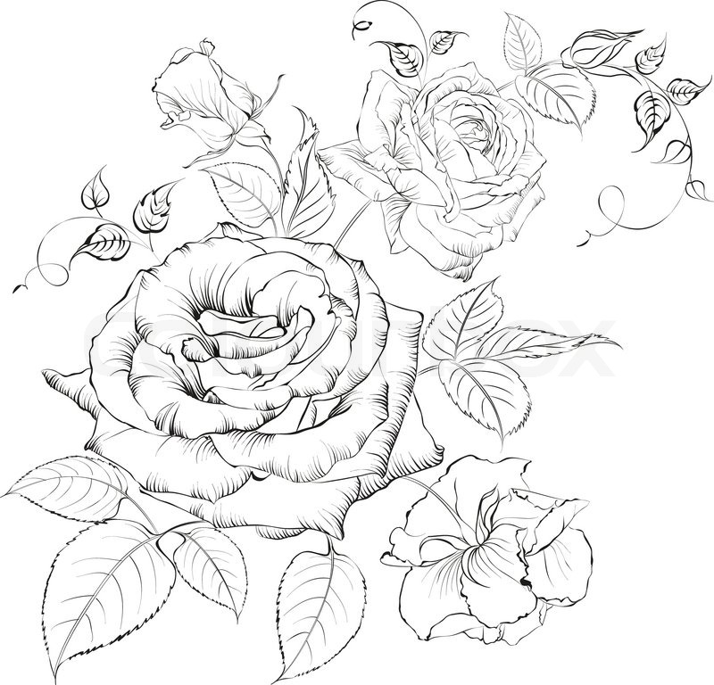 Bouquet Of Roses Vector Illustration Colourbox