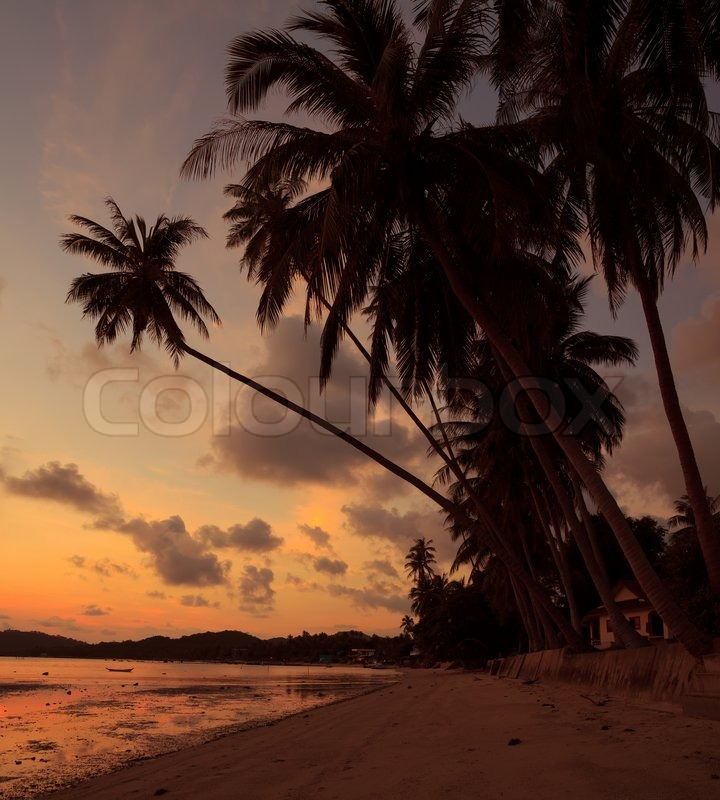 Island Beach Sunset: Idyllic Tropical Island Beach At Sunset ...