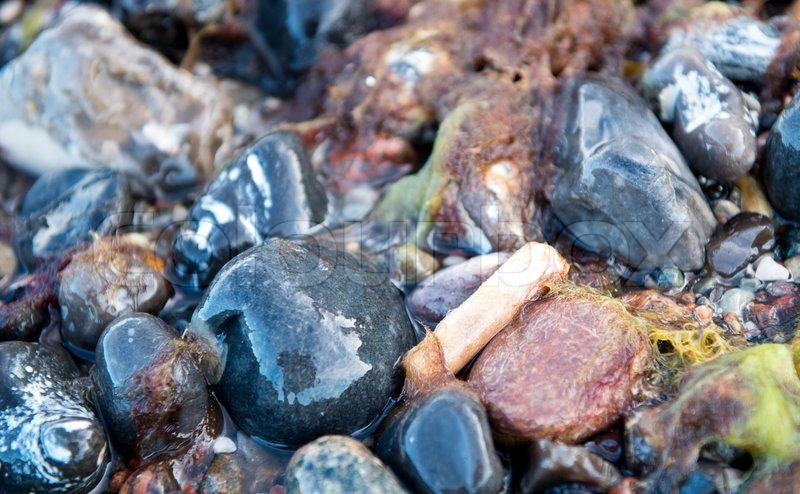 Klint Fossil Mons Klint Can go Fossil