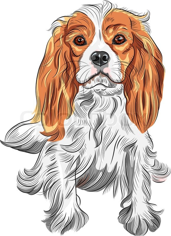 Vector Color Sketch Of The Dog Cavalier King Charles Spaniel Breed   Stock Vector   Colourbox