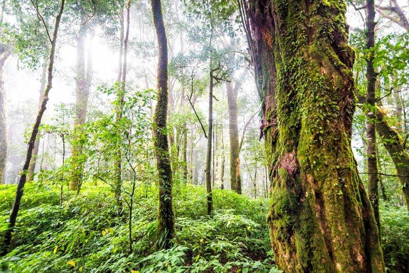 forest preservation essay