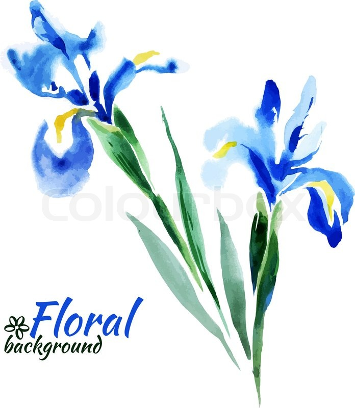 8797680 beautiful watercolor paint blue irises vector illustration cards of happy mother s day cards of happy valentine s day