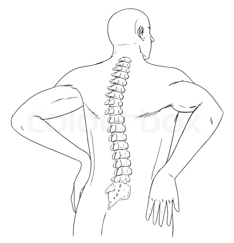 Outline Of The Human Back And Spine Stock Vector Colourbox
