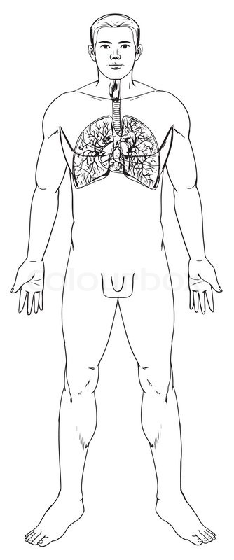 outline illustration of the human
