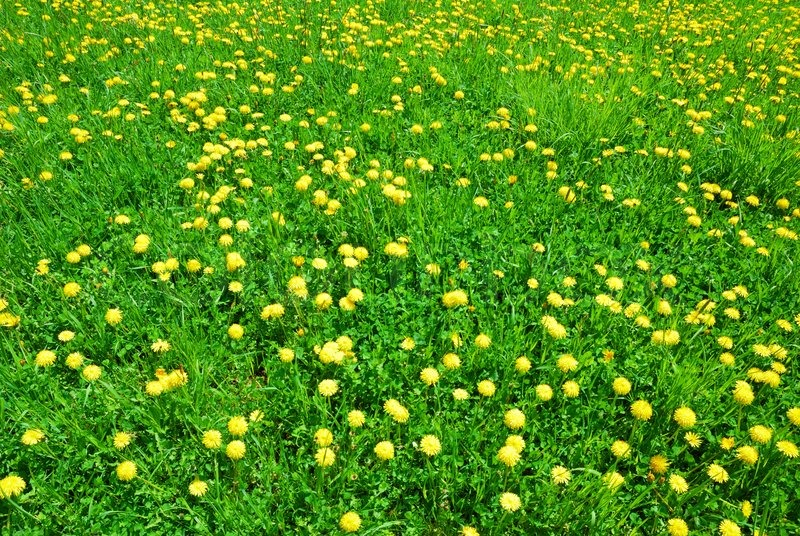 Green grass and yellow dandelion flowers in springtime stock photo green grass and yellow dandelion flowers in springtime stock photo colourbox mightylinksfo