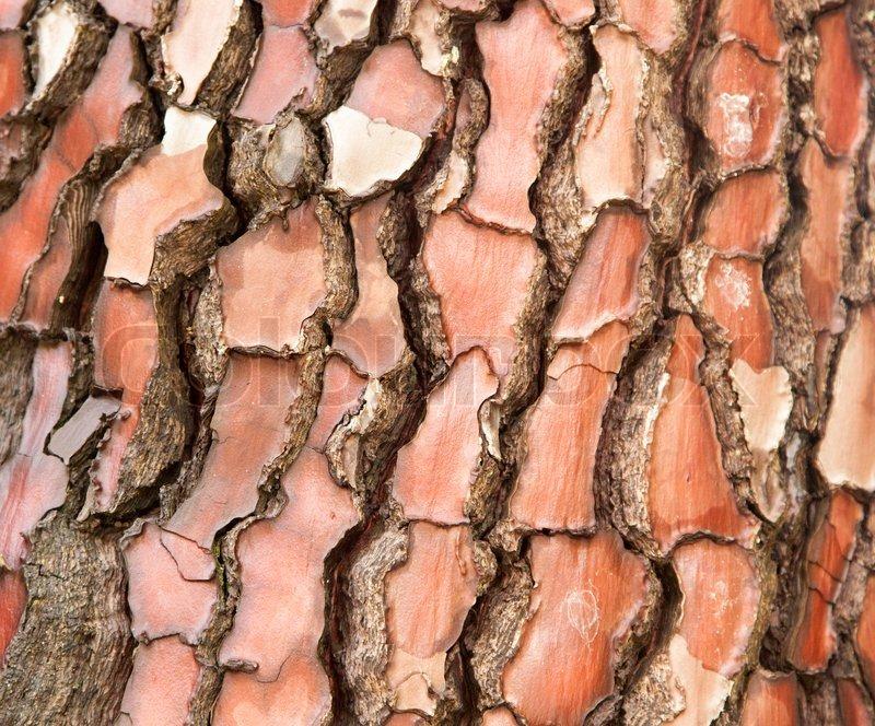 Teakbaum rinde  Roter Baum-Rinde-Nahaufnahme   Stockfoto   Colourbox