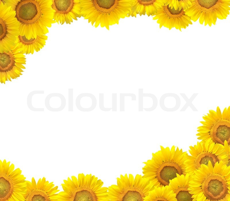 clip art borders sunflowers - photo #24