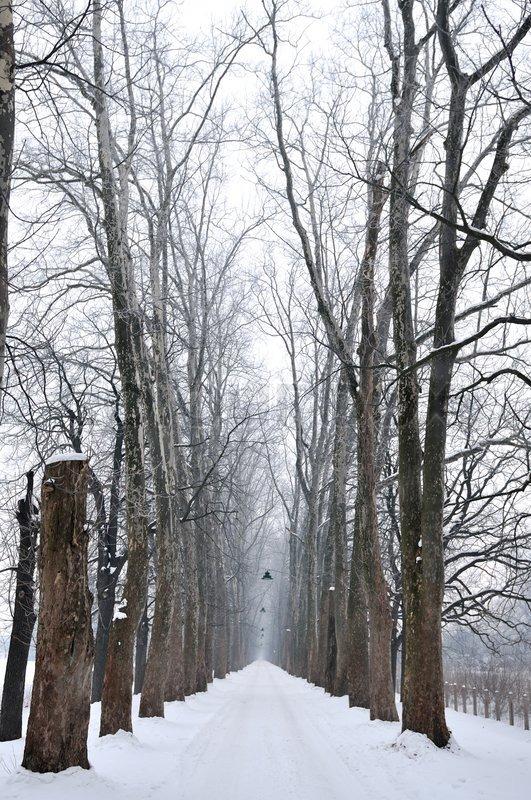 Winter,snow,alley,nature,park,white,frost,season,tree,light,land, stock photo