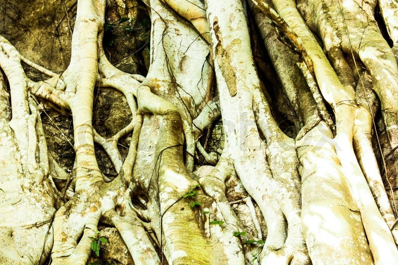 Bark of tree and roots in forest texture background, stock photo