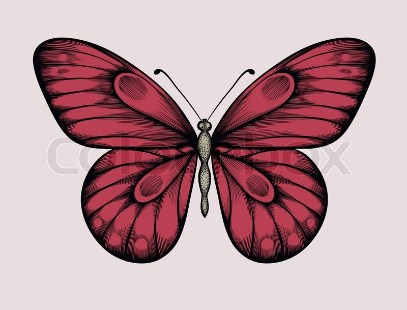 Contour Line Drawing Butterfly : Beautiful butterfly in vintage style hand drawn contour