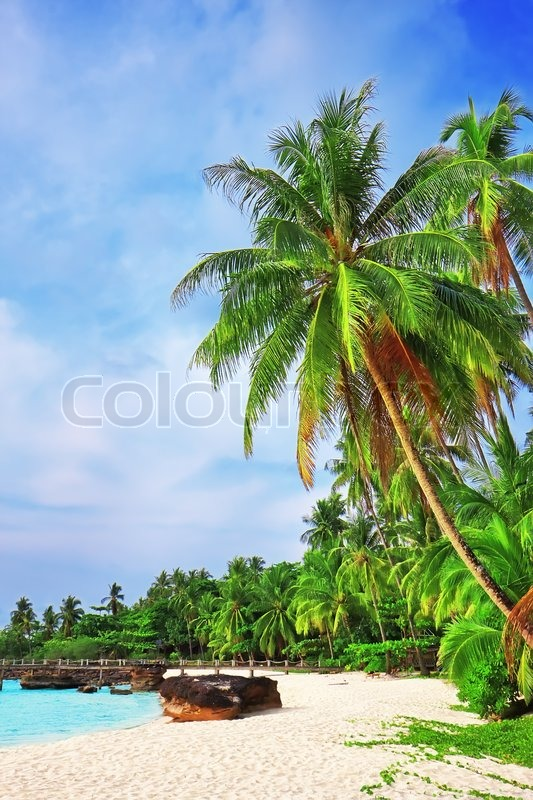 Palm trees in tropical perfect beach at Koh Kood , Thailand, stock photo