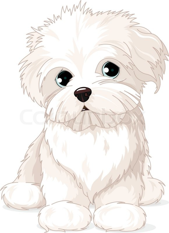 Picture Of Maltese Poodle Dog