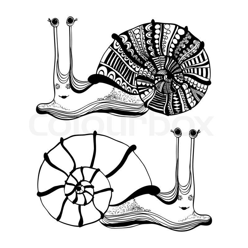 Sea Snail Drawing Cartoon Drawing of Cute