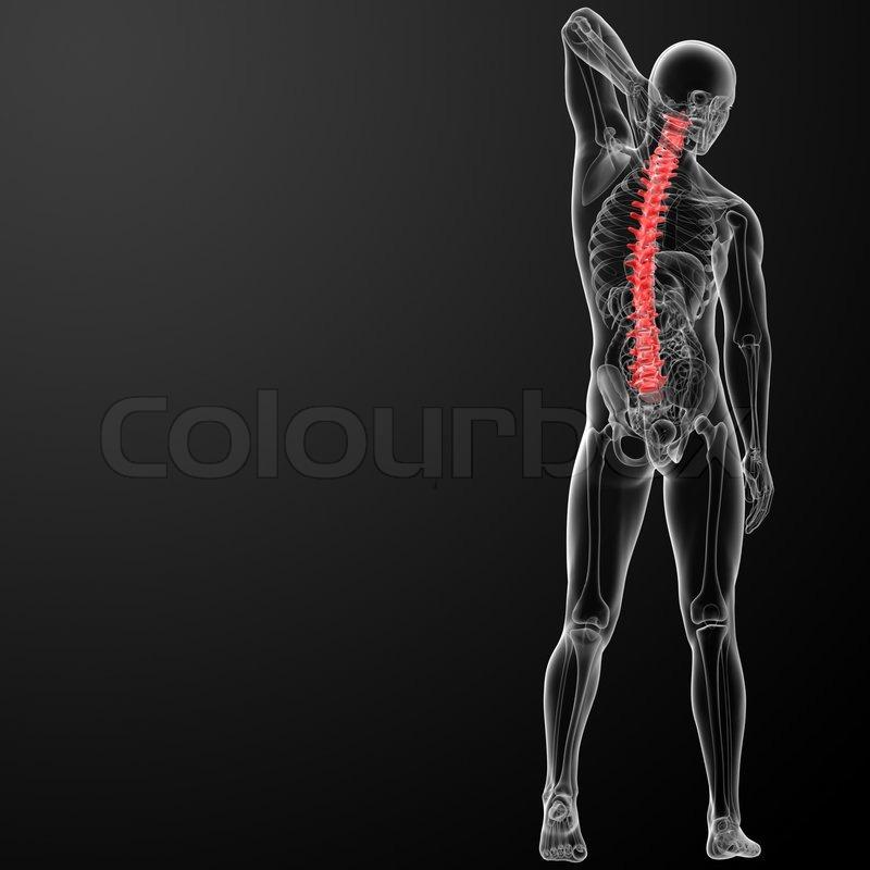 3D Render menschlichen Wirbelsäule Anatomie | Stockfoto | Colourbox