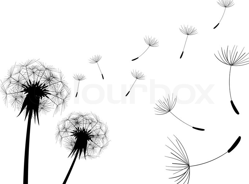 Dandelion In Wind Painting Black And White