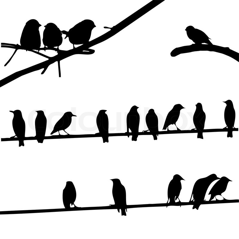 birds on wires  silhouette set vector illustration for your design