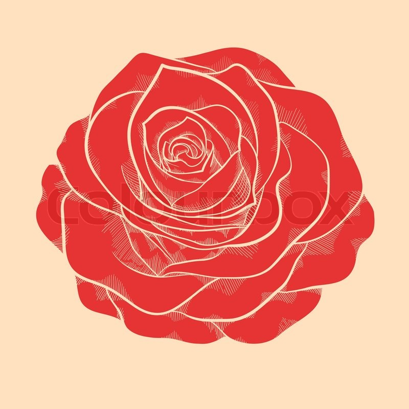 Beautiful pink rose in a hand drawn graphic style in vintage