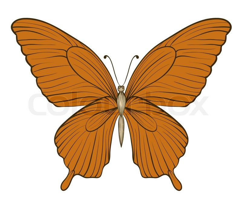 Contour Line Drawing Butterfly : Beautiful vintage butterfly isolated on white background