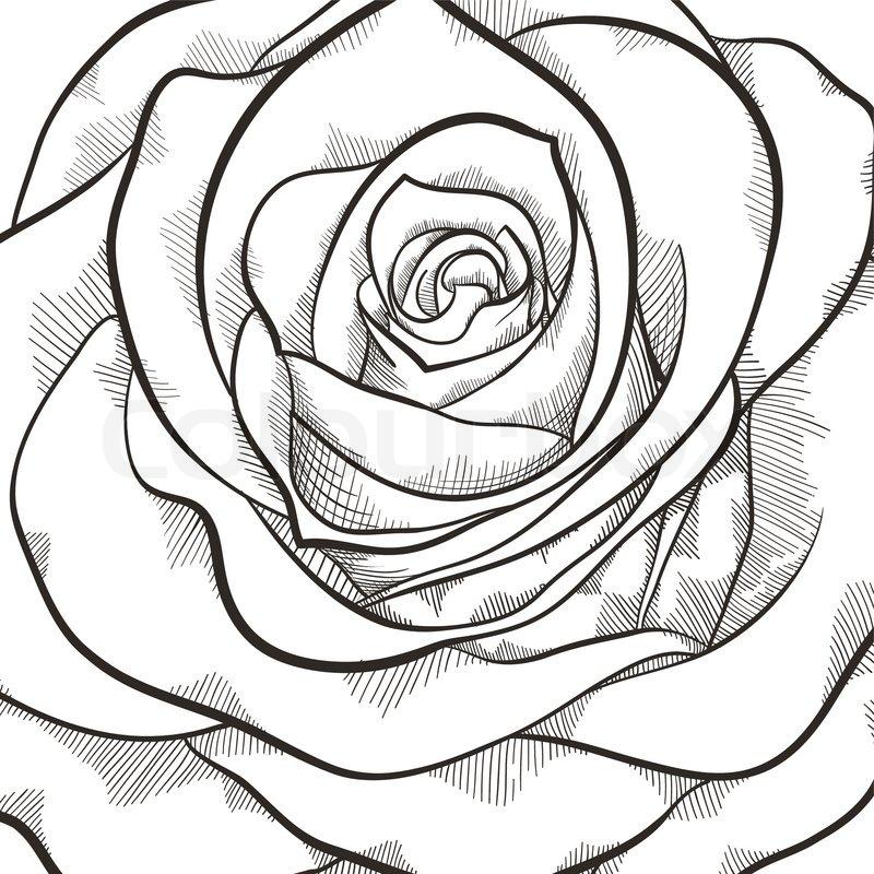 hintergrund mit sch ne schwarze und wei e rose handgezeichnete h henlinien und schlaganf lle. Black Bedroom Furniture Sets. Home Design Ideas