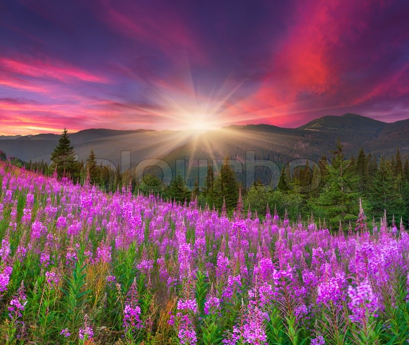 Beautiful autumn landscape in the mountains with pink for Beautiful flower landscapes
