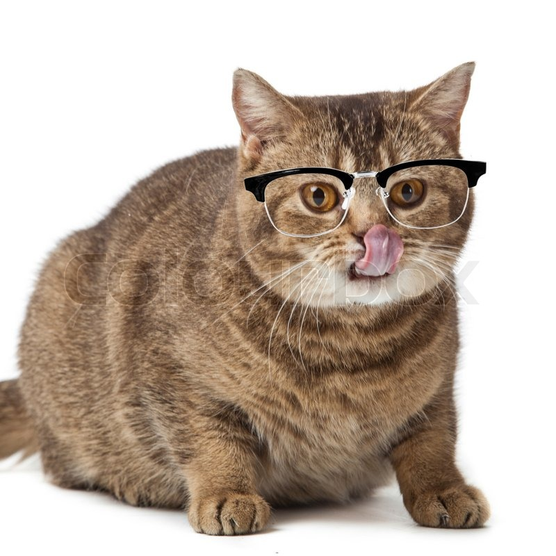 Cat Glasses Background Cat With Glasses Isolated