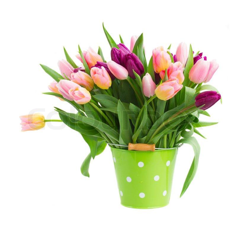 rosa und violette tulpen im topf stockfoto colourbox. Black Bedroom Furniture Sets. Home Design Ideas