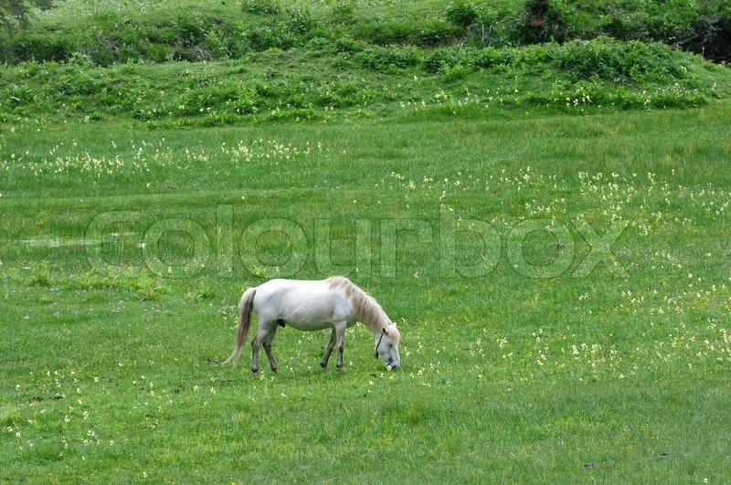 White horse eating grass - photo#25