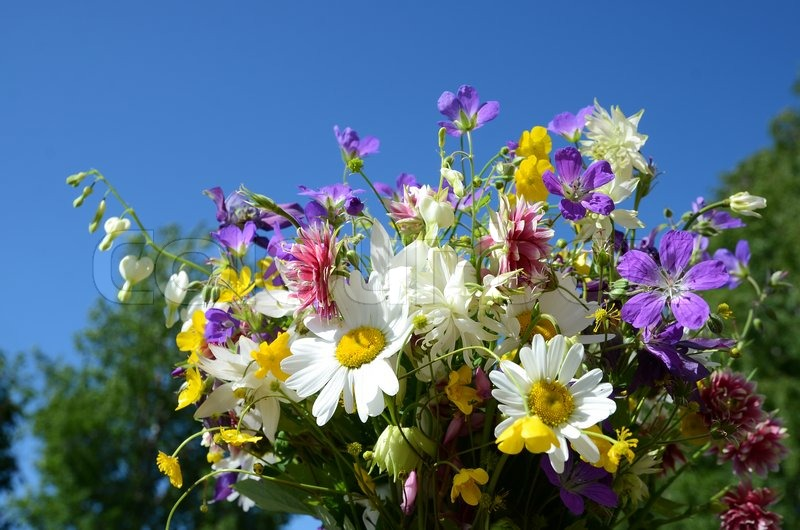 Daisies And Midsummer Flowers In A Stock Image Colourbox
