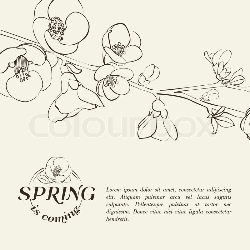 Chinese Flower Vector Chinese Flowers Branch Vector