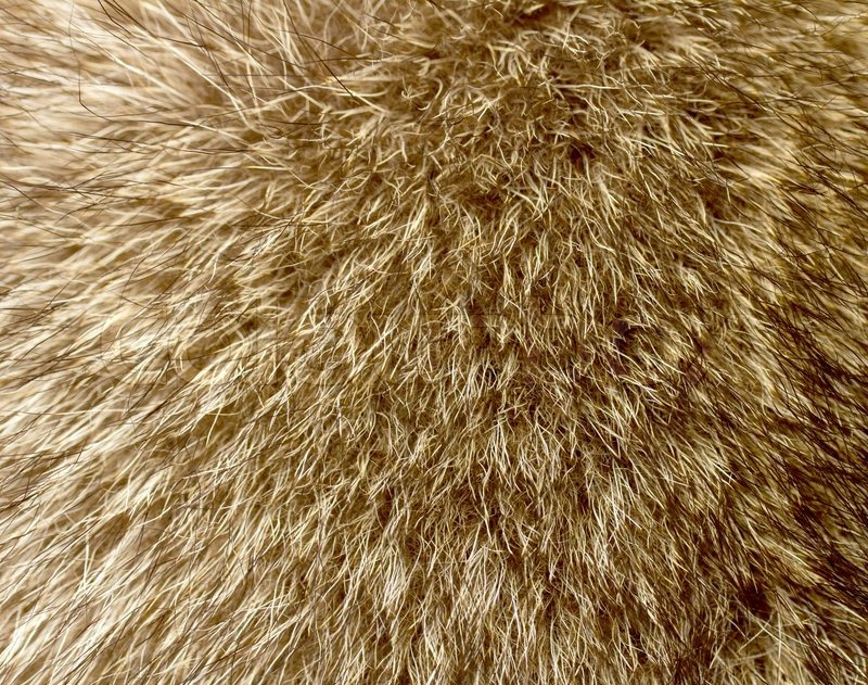 Close Up Of An Animal Fur Stock Photo Colourbox