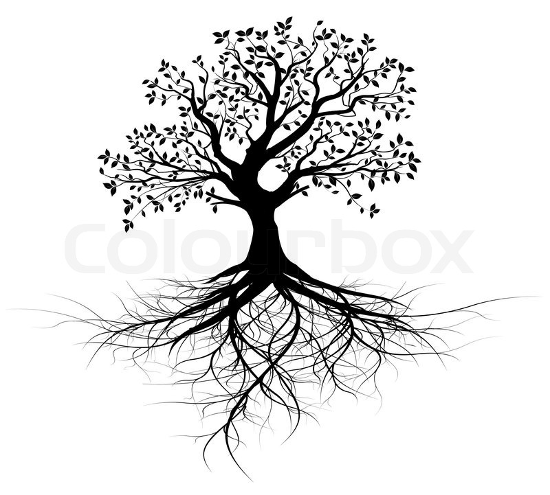 Whole Black Tree With Roots Isolated White Background
