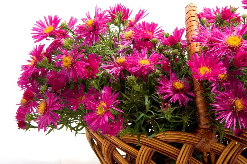 Picture of the basket of flowers on a white background, stock photo