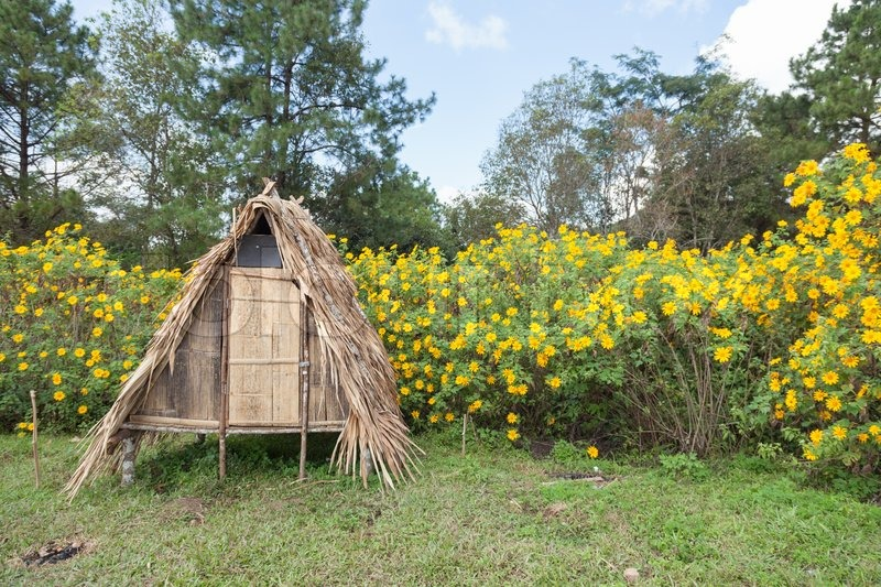 Stock image of 'hut on the lawn A small shrub with yellow flowers in the background.'