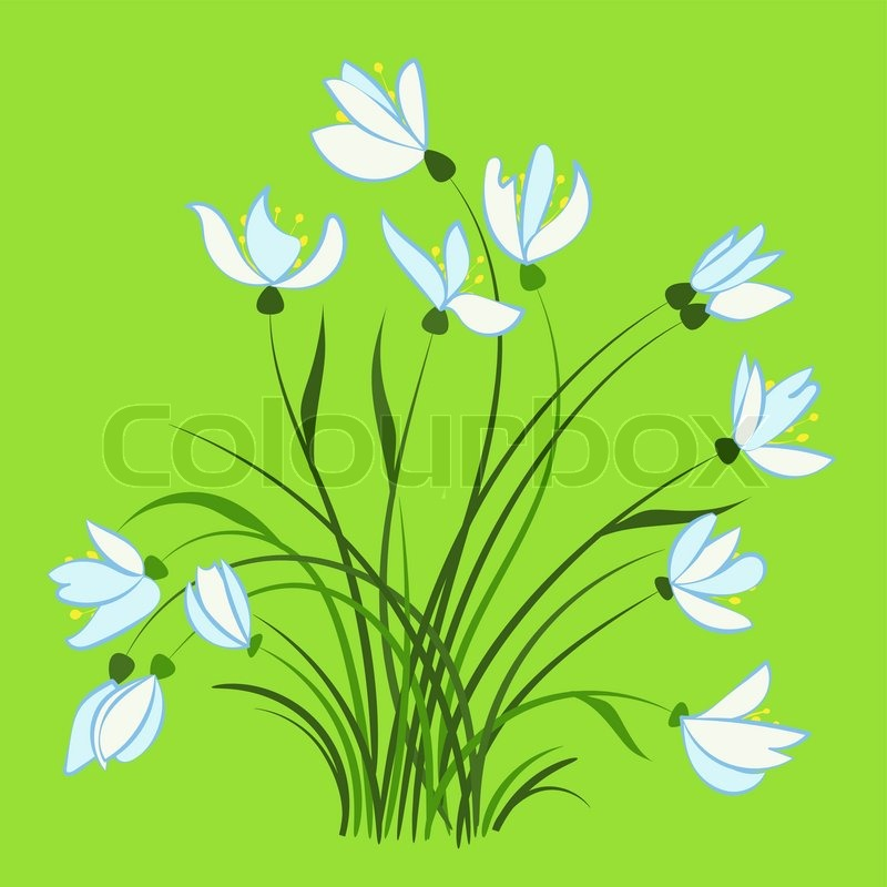 Erste Fruhlingsblumen Vektorgrafik Colourbox